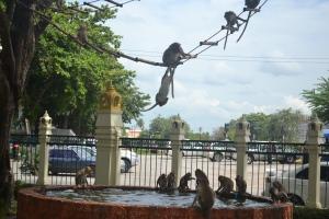 monkeysthailand