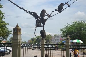 monkey_thailand