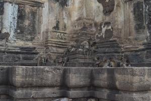 thailand monkeys