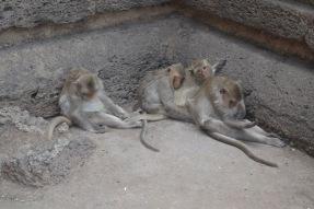 thailandmonkeys