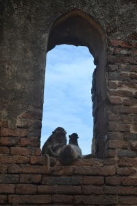 thailandmonkeys